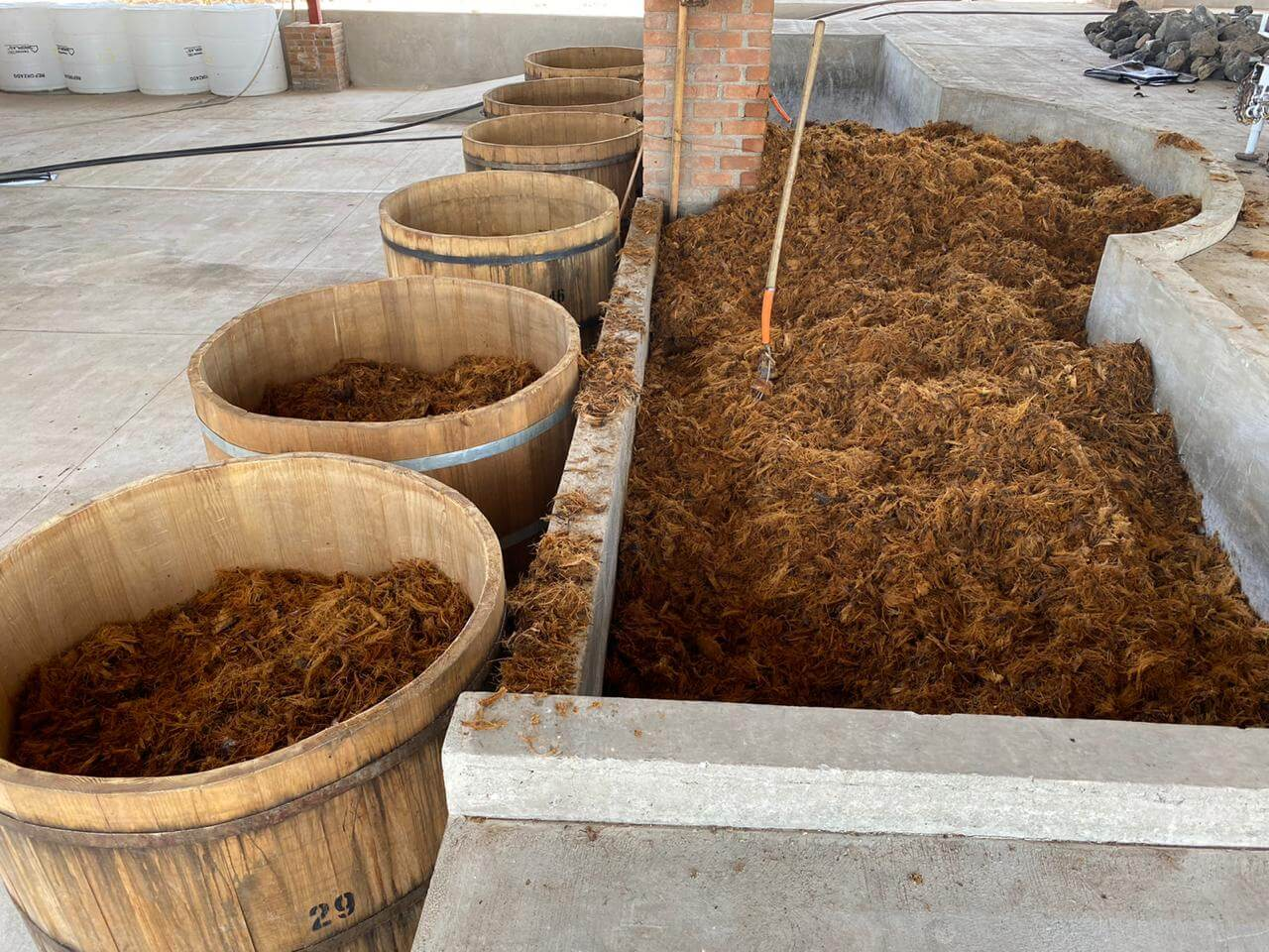 fermentación del agave un paso de la elboración del mezcal
