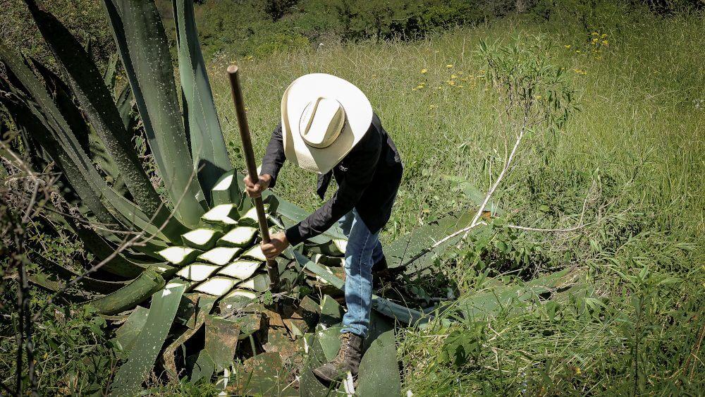 origen del mezcal mexicano